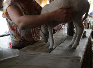 6 mouton bar